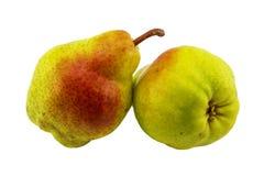 两成熟和水多的梨 免版税库存照片