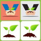 两手种植土壤的两片叶子植物 库存照片