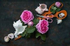 两把剪刀在桃红色玫瑰开花和白海壳中的:巨大的橙色剪刀在框架说谎对角地和在他们 免版税库存照片