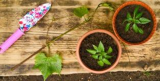 两把花盆和庭院铁锹 库存图片
