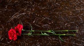 两支康乃馨,在一座纪念碑的背景,与题字的一个地方 免版税库存照片