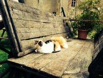 两放弃了睡觉在一辆老木无盖货车的猫外面 免版税库存照片