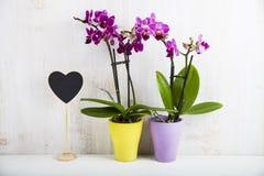 两朵兰花兰花植物和心脏 库存图片