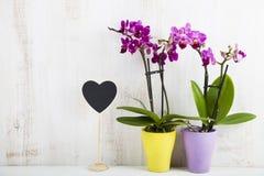 两朵兰花兰花植物和心脏 库存照片