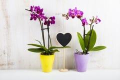 两朵兰花兰花植物和心脏 免版税图库摄影