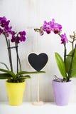 两朵兰花和心脏 免版税库存照片