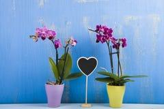 两朵兰花在罐和心脏 库存照片