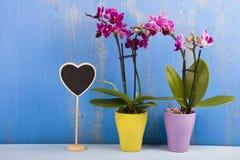 两朵兰花在罐和心脏 免版税库存照片