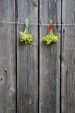 两朵共同的cowslip樱草属veris花束 免版税库存图片