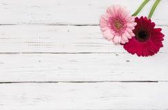 两朵在白色木背景的桃红色花装饰 库存图片