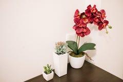 两朵多汁植物和兰花 库存图片