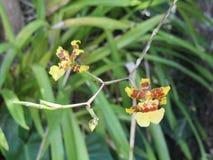 两朵小花照片  免版税库存图片