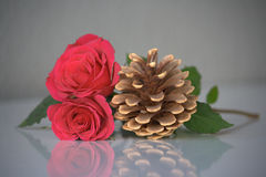 两朵桃红色玫瑰和杉木锥体 库存照片