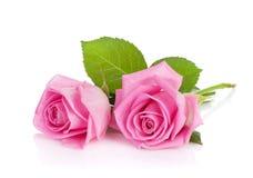 两朵桃红色玫瑰花 免版税库存照片