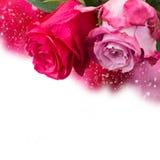 两朵桃红色花关闭  免版税库存图片