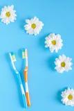 两朵牙刷和春黄菊花在蓝色背景 图库摄影