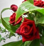 两朵玫瑰红色装饰开花花束 免版税库存图片