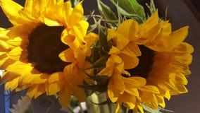 两朵美丽的太阳花 库存图片
