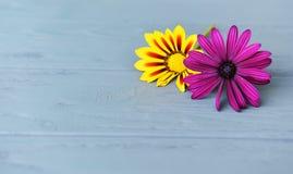 两朵花是黄色和淡紫色的在轻的木背景 免版税库存图片
