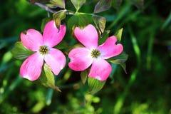 两朵花 免版税图库摄影