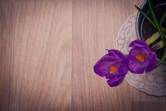 两朵紫色番红花特写镜头 免版税库存照片