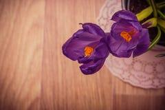 两朵紫色番红花特写镜头 库存图片