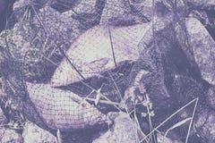 两条大被抓的鱼,在渔夫` s网的鲂在海滩,在草 成功的渔,运气,时运的概念 库存图片