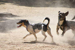 两条小狗使用与在一个多灰尘的操场的一个球 图库摄影