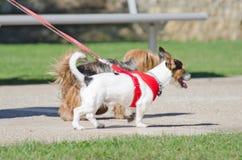 两条小狗 免版税库存照片