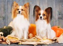 两条成人狗画象  免版税库存图片