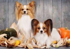 两条成人狗 免版税库存图片
