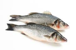 两条新鲜的鲈鱼鱼 免版税图库摄影
