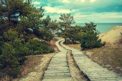 两条木路在海附近的公园 免版税库存照片