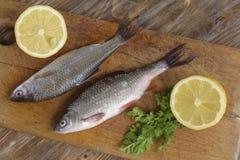 两条未加工的新鲜的河鱼 免版税库存照片