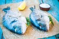 两条未加工的dorada鱼用柠檬、莳萝和海盐 免版税库存照片
