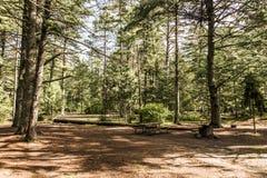 两条河阿尔根金族国家公园美好的自然森林风景加拿大空的帐篷露营车Campground湖  免版税库存照片
