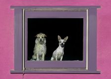 两条狗在窗口里 免版税库存照片
