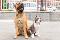 两条狗坐 免版税库存照片