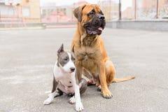 两条狗坐 库存图片