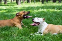 两条疲乏的狗在公园 免版税库存照片