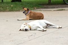 两条街道狗 库存照片