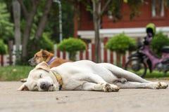 两条街道狗 免版税库存照片