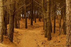 两条路和避免被迷惑的森林的决定 免版税库存照片