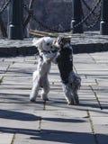 两条跳舞的狗在公园 库存照片
