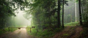 两条道路在有雾的森林里在全景 免版税库存图片
