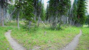 两条道路在木头分流 免版税库存照片