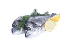 两条gilthead鱼用柠檬 库存图片