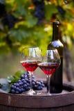 两杯红葡萄酒和瓶 库存图片