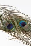 两根孔雀羽毛 库存照片