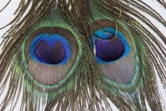两根孔雀羽毛 免版税库存照片